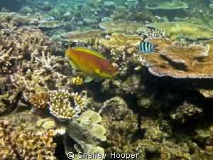 Beautiful fish and coral Great Barrier Reef, Cairns, Aust... by Shelley Hooper 